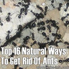 Top 16 Natural Ways To Get Rid Of Ants