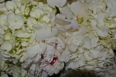 white hydrangeas add a richness and elegance to any flower vase