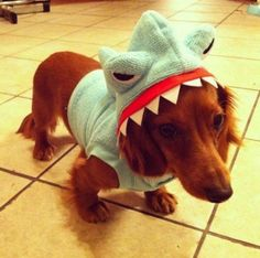 Hungry Shark( Actually a dog! ) - Imgur