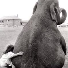 I still want an elephant. Chad hasn't done that yet but I know he would if he could.