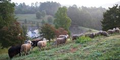 Blackberry Farm, Tennessee- check out other pictures along with their website- it's breathtakingly beautiful!