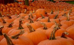 How to Replant Pumpkin Seeds