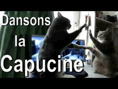 Dansons la capucine: adorable cat video (subtitles in English)