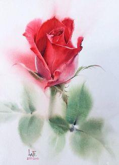 Роза от Lafé