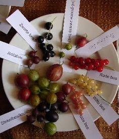 Rode- en witte trosbessen in fruithaag geven veel bessen en zijn goedkoop in aankoop.