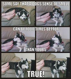 A Dog's Sense Of Smell