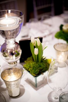 White tulips and moss centerpiece