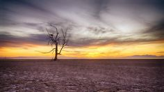 Photograph Standing Tall by Nazeem S on Salton Sea, Sheik, Stand Tall, Natural Wonders, Photograph, Trees, Lost, Explore, Sunset