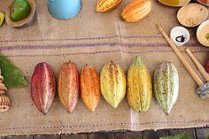 The Grenada Chocolate Festival 2015