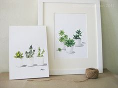 Succulents - Any TWO  8'x11.5' Fine Art Print