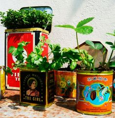kitcken herbs in lovely vintage tin cans
