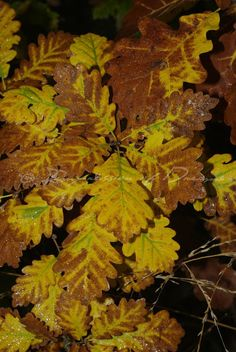 [Photography Tuesday] Fallen Leaves