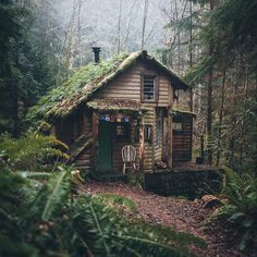 tree house plant outdoor and natureYou can find Outdoor living and more on our website.tree house plant outdoor and nature Cabin In The Woods, Cottage In The Woods, Into The Woods, Tiny House Cabin, Cabin Homes, My House, Beautiful Homes, Beautiful Places, Rustic Home Design