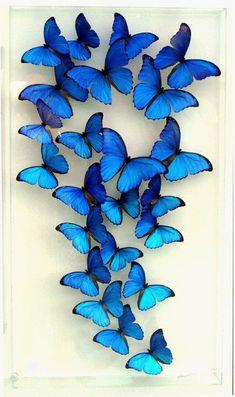 blue, butterflies, and wallpaper