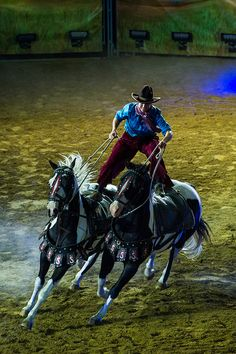 Tails by Calgary Stampede, double horse riding not an easy task. Calgary, Alberta (Canada)