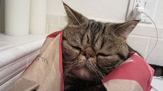 Narcoleptic Willie Falls Asleep While Escaping Paper Bag