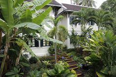 Tropical gardens at Villa Maly gives our boutique hotel in Luang Prabang a green look all year round. #boutiquehotel #boutiquehotelluangprabang