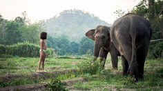 Familien und Backpacker die Thailand bereisen, haben nicht selten die feste Absicht, Elefanten zu begegnen und auf ihnen zu reiten. Das ist für uns einerseits verständlich, sind es doch unglaublich faszinierende Geschöpfe. Wir schlüpfen aber häufig und gerne in die Rolle der Mahner und bitten Leute darum, nicht wahllos zu einer der unzähligen Touristenattraktionen mit Reitgelegenheit zu laufen, sondern lieber nach Projekten Ausschau zu halten, die sich im positiven Sinne diesen…