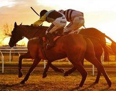 CHELMSFORD, HAYDOCK, SALISBURY, SEDGEFIELD RACES – HORSE RACING TIPS FOR SEPTEMBER, THE 1ST