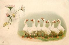 seven geese, green background