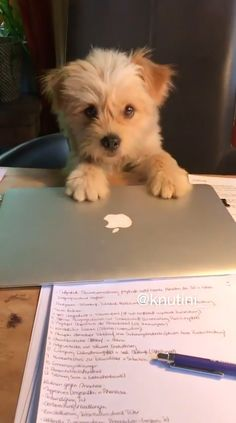 Super Cute Puppies, Baby Animals Super Cute, Cute Baby Dogs, Cute Little Puppies, Cute Funny Dogs, Cute Dogs And Puppies, Cute Little Animals, Cute Funny Animals, Cute Cats