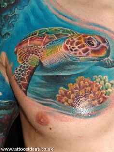do turtles have nipples