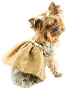 Vestido dorado para perros
