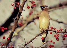 Bird Photo Print   Birds at Play VII  8 x 10 by PKellerPhotography, $25.00