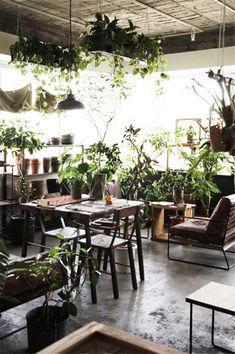 L'invasion des plantes vertes | Hachi café au Japon