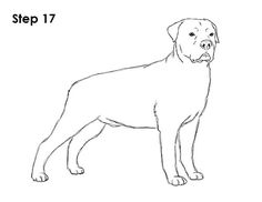 Rottweiler favorite Dog Colouring pages Pinterest Dog
