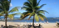 Embassy Suites Dorado Del Mar - Beach & Golf Resort Hotel, Puerto Rico - On-site Beach Palms
