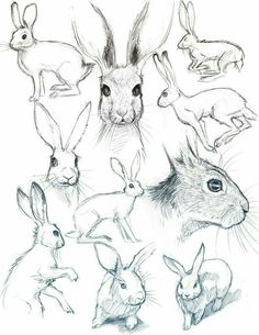 40 Free & Easy Animal Sketch Drawing Information and Ideas - Brighter Cra . - 40 Free & Easy Animal Sketch Drawing Information and Ideas – Brighter Craft – - Rabbit Drawing, Rabbit Art, Jack Rabbit, Bunny Sketches, Drawing Sketches, Drawing Drawing, Sketch Art, Anatomy Drawing, Anime Sketch