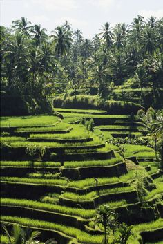 Terraced rice fields on Bali Island, Indonesia.  Photo:  National Geographic