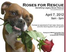 For my Texas friends ... if you are in the North Richland Hills area this weekend ... stop by and grab up some rose bushes for your yard!! A portion of the profits from this will benefit Legacy Boxer Rescue :)))  WHAT: Roses for Rescue  WHEN: Saturday, April 7th, 2012. 9 AM to 5 PM.  WHERE: NRH2O Family Waterpark, 9001 Boulevard 26, North Richland Hills, TX 76180    2 Gallon Assorted Knock Out Roses $10.00    3 Gallon Assorted Knock Out Roses $15.00    5 Gallon Knock Out Tree Roses $20.00