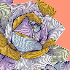 Draw the rose then just add the lines.not really zentangle but similar ideas Pattern Illustration, Rose Illustration, Elements Of Art, Art Plastique, Teaching Art, Anime Comics, Doodle Art, Painting & Drawing, Drawing Tips