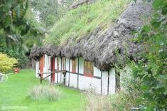 This is an eelgrass thatched home in Denmark. The thatch can last up to 400 years. More including video at www.naturalhomes.org/seaweed-house.htm
