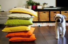 8 Do's and Don�ts for Decorating With Pets