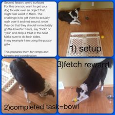 Weird surface lesson, bad pictures sorry Dog agility Diy dog agility beginner dog agility