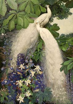 """White peacock Jessie Hazel Arms Botke (May 1883 – October was an Illinois and California painter noted for her bird images and use of gold leaf highlights. Peacock Drawing, Blue Delphinium, Delphiniums, White Peacock, Academic Art, Diamond Art, Exotic Birds, Figure Painting, Mobile Wallpaper"