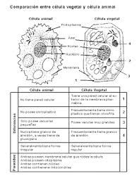 Parts of a Microscope Teaching Pinterest Homeschool