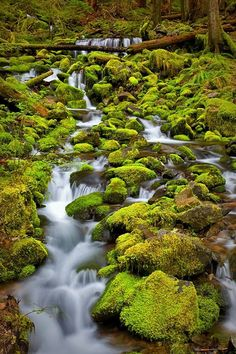 'Nature Speaks' - Wonderful stream through the moss along the Sol Duc Falls Trail, Olympic National Park, Washington All Nature, Amazing Nature, Parc National, National Parks, Places To Travel, Places To See, Rv Travel, Landscape Photography, Nature Photography