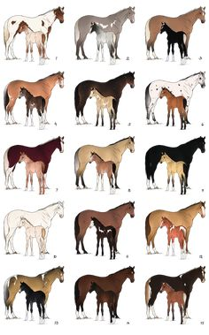 Mare and foal batch - CLOSED by Anonymous-Shrew - Pferde - Cute Horses, Pretty Horses, Horse Love, Beautiful Horses, Cavalo Wallpaper, Horse Coat Colors, Horse Markings, Horse Anatomy, Horse Facts