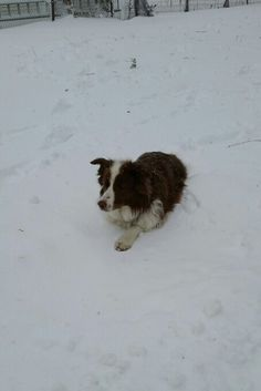 Ruby trying to move in the heavy snow...one paw out three to go...lol!!
