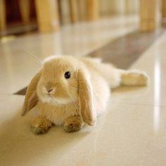 Bunnies.. ))))))