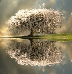 Would love this outside of my window / tree reflection / nature photography Pretty Pictures, Cool Photos, Random Pictures, Pictures Of Spring, Beautiful World, Beautiful Places, Simply Beautiful, Trees Beautiful, Romantic Places