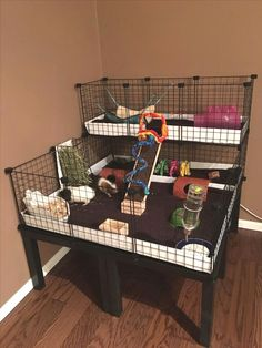 trendy ideas for pet store ideas guinea pigs - Pin Hairs Guinea Pig Hutch, Guinea Pig House, Pet Guinea Pigs, Guinea Pig Care, Animal Room, Indoor Guinea Pig Cage, Guinie Pig, Pig Habitat, Bunny Cages