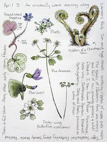 drawing inspiration from nature Garden Journal, Nature Journal, Botanical Drawings, Botanical Art, Plant Illustration, Botanical Illustration, Nature Sketch, Watercolor Journal, Nature Collection