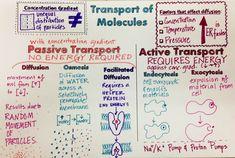 We Teach High School: Cell Transport & Tonicity Doodle Notes Biology Classroom, Biology Teacher, Teaching Biology, Science Biology, Ap Biology, Life Science, Earth Science, Study Biology, Cell Biology