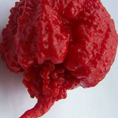 Carolina Reaper chilli seeds x 200 Bulk Buy – WORLDS HOTTEST CHILLI How hot are they? Official Guinness World Records Hottest Chilli. 440 times hotter than JALAPEÑO 325 times hotter than TABASCO chilli and 25 times hotter than a HABANERO Chilli See the comparison in Scoville heat scale: A Jalapeno logs about 5,000 on Scoville …