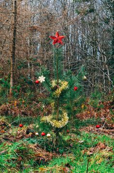Our Woodland Christmas Tree ♥
